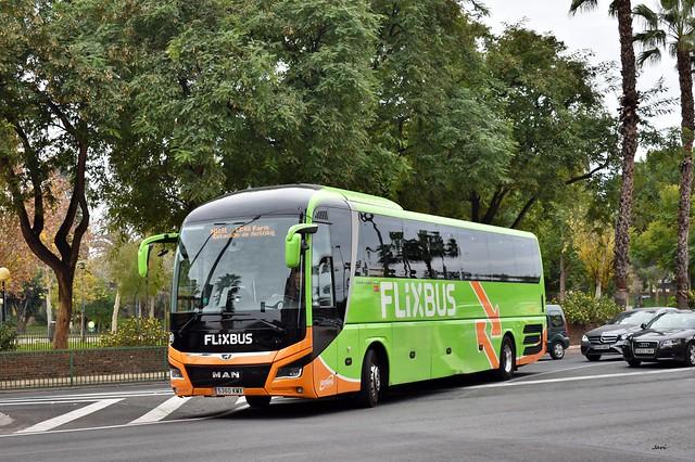 Man Lion,s Coach de Flixbus