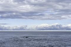Nayarit Sea No. 5
