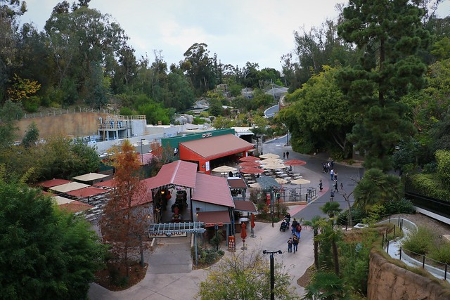 Zoo from Above 7D2_4706