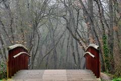 Bridge to your imagination / Puente a su imaginación