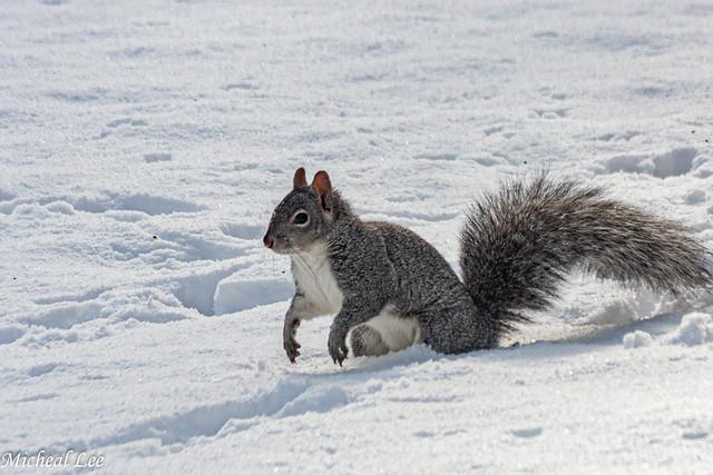 Tree Rat in Snow