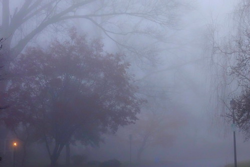 fog morning trees red yellow wynnewood shortridge