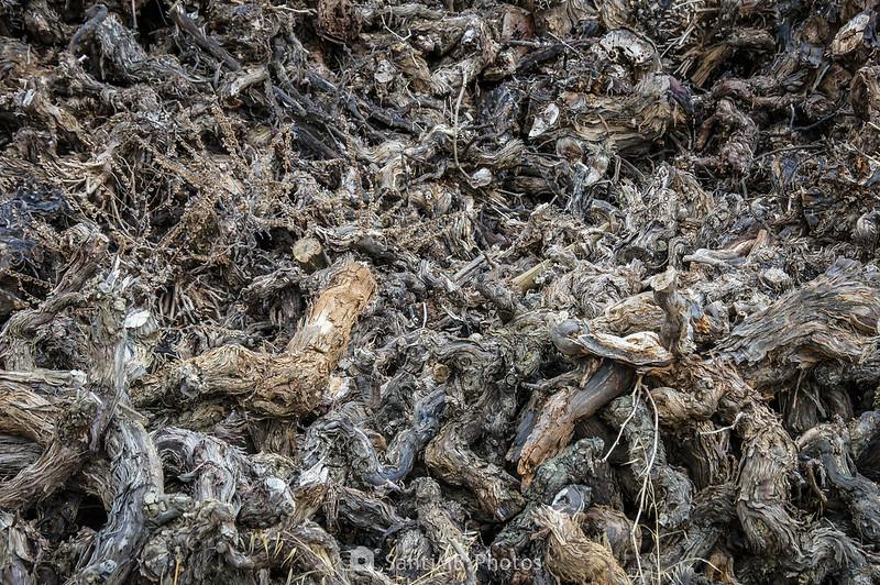 Leña de sarmientos en Cal Muntaner