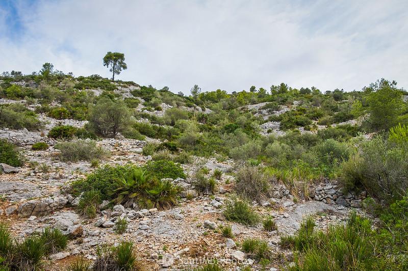 Vegetación típica del Garraf en el camino al Castell Vell d'Olivella