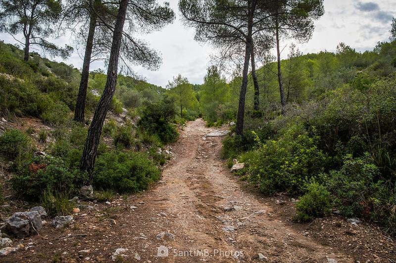 Camí del Castell Vell d'Olivella