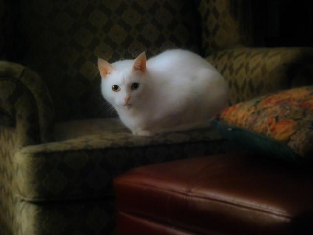 My Feline Muse