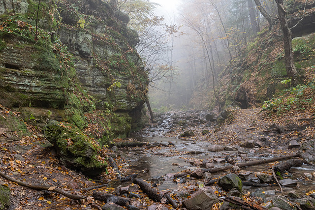 Foggy Glen 2