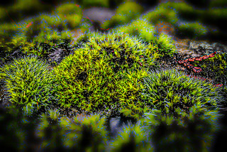 Edgy mossy rock