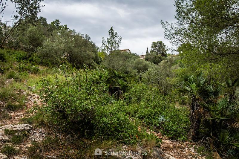 Casas de Olivella desde el SL-C 100