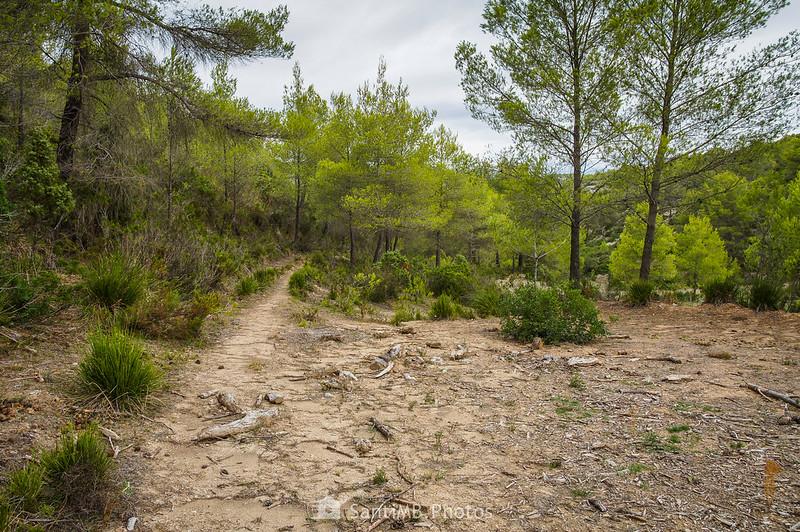 Antiguo camino de Olivella a Mas Vendrell