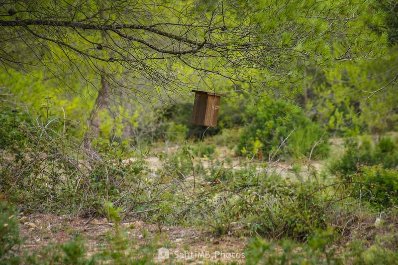 Nido de madera en un pino frente a Mas Vendrell en Olivella