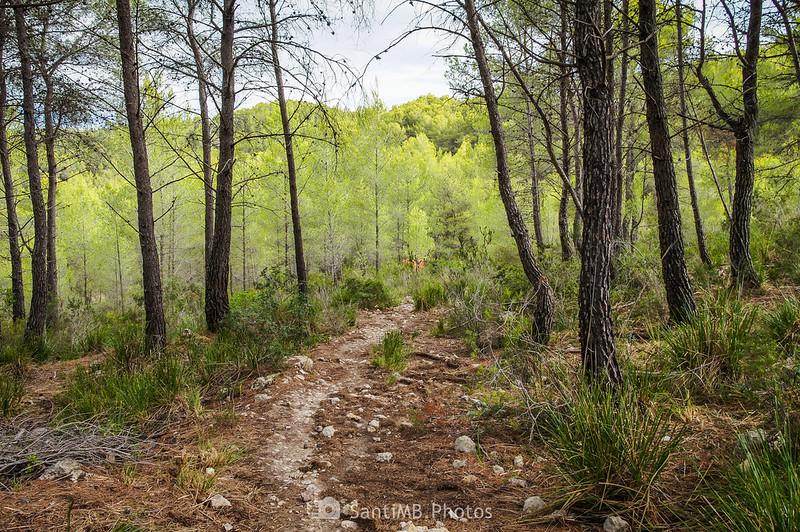 Camino de Cal Vendrell en Olivella