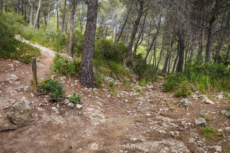 Bajando del Puig Molí a Cal Vendrell
