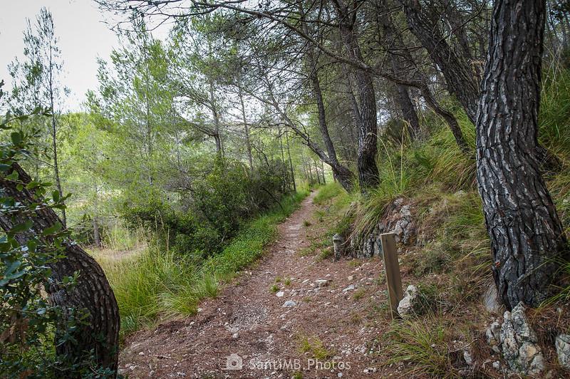 Por el Camí Blanc en Olivella