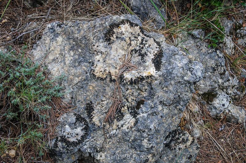 Roca con liquen en el SL-C 100 cerca de Olivella