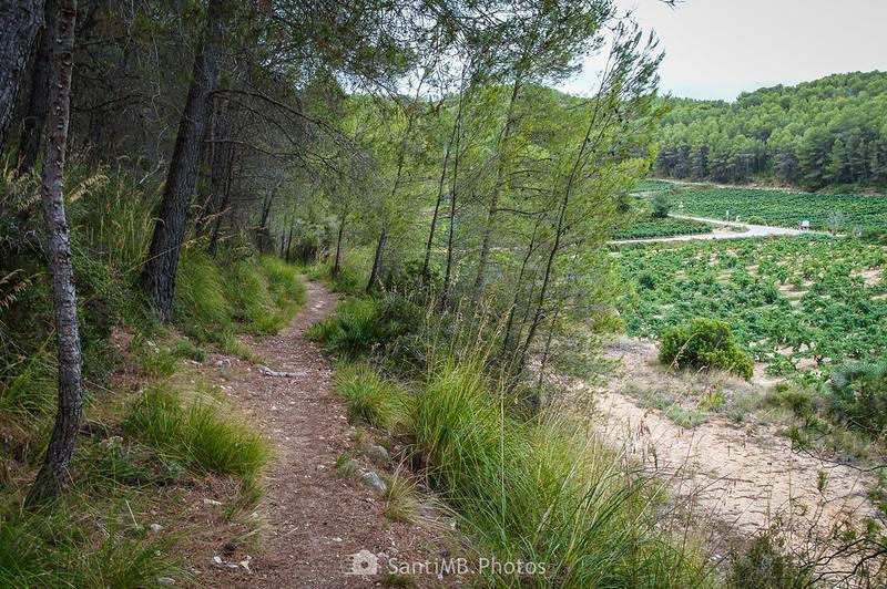 El Camí Blanc llegando a Olivella