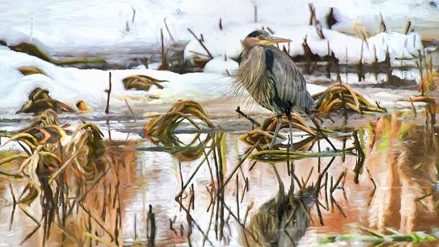heron in the marsh . . .