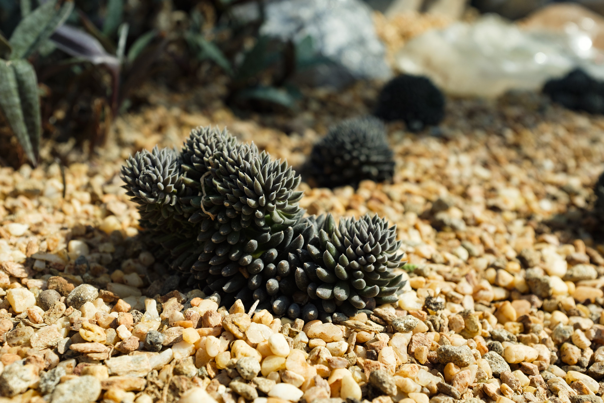 A photo of plants in gravel