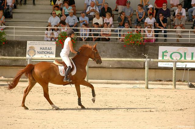 Au Normandie Horse Show