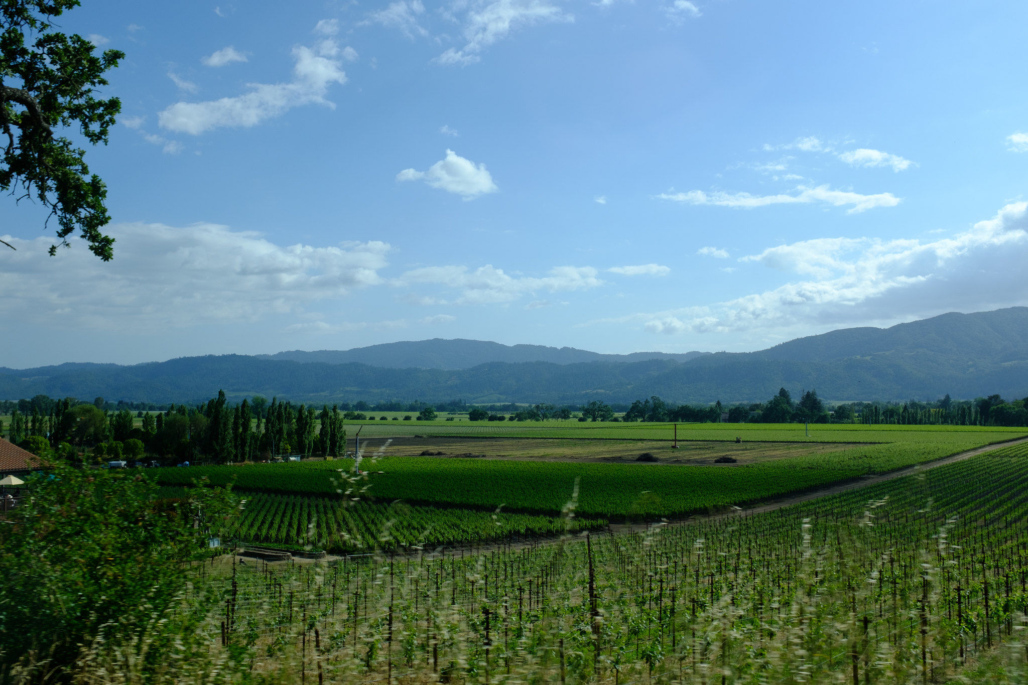 A photo of vineyards