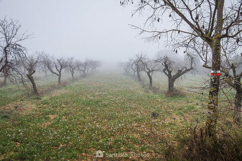 Almendral junto al camino de Guimerà a Verdú