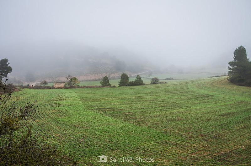 Campos en el camino de Mas de Bondia y Guimerà