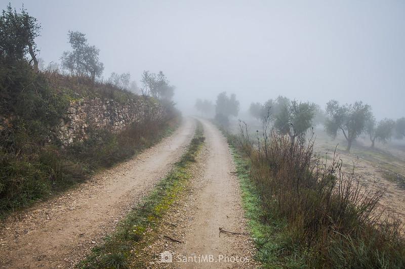 Camino de Mas de Bondia a Guimerà entre olivares