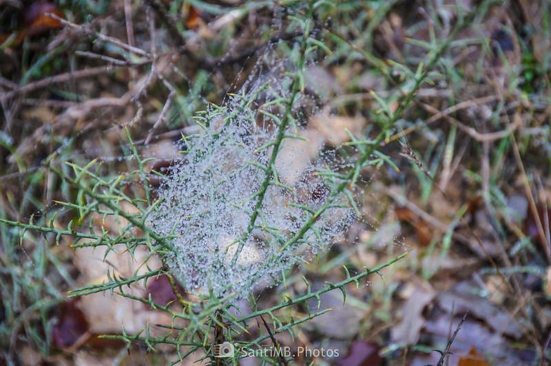 Gotas de rocío atrapadas en tela de araña