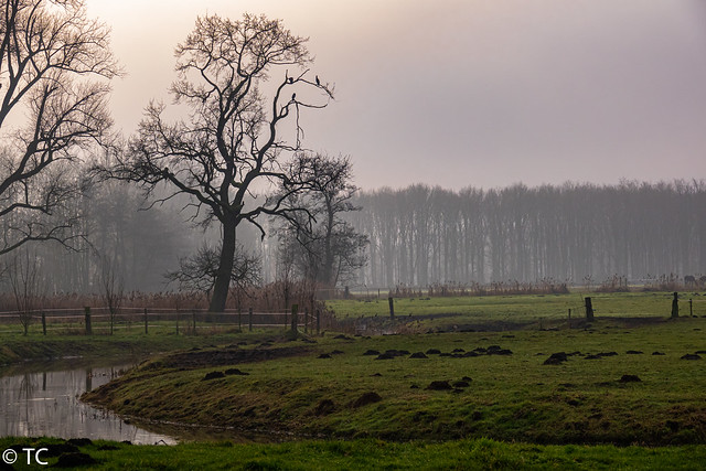Brabants Landschap Kleine Dommel