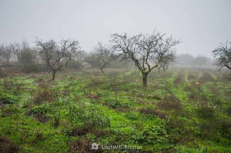 Campo de almendros junto al camino de Verdú a l'Ametlla de Segarra