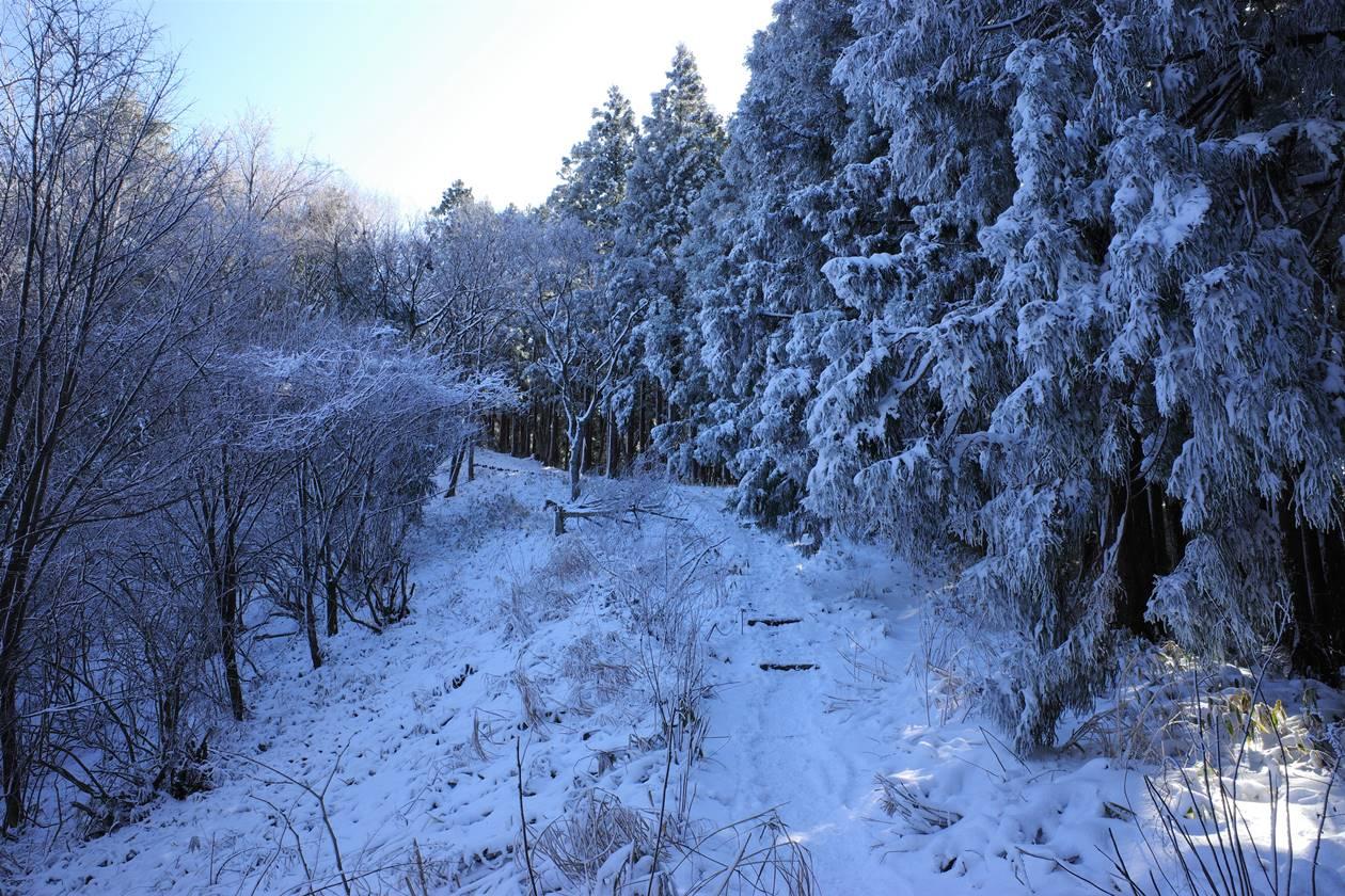 陣馬山~高尾山の樹氷ロード