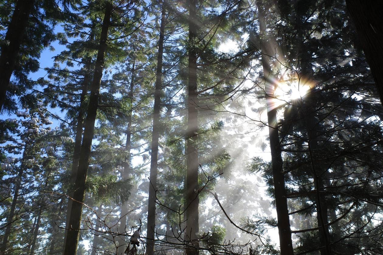 神々しき森の光