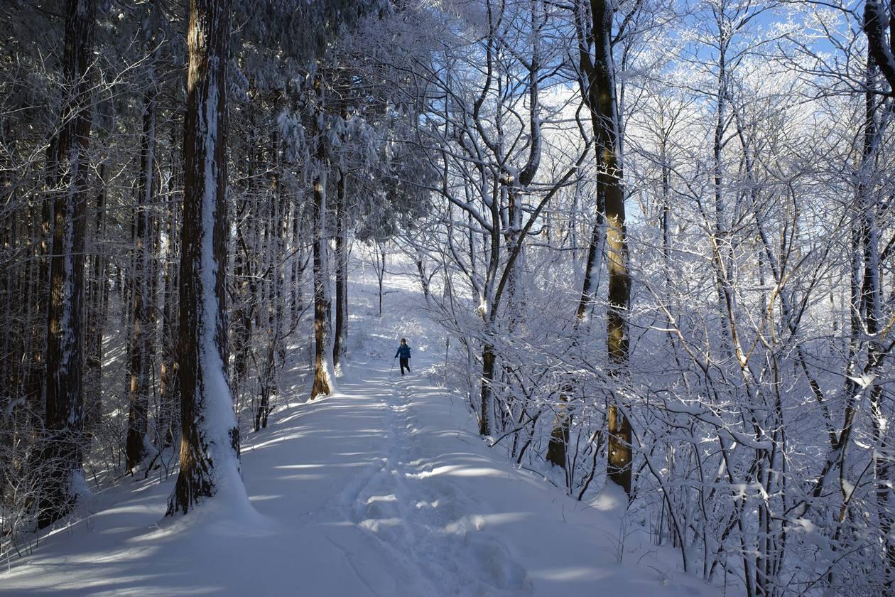 陣馬山~高尾山 雪の稜線