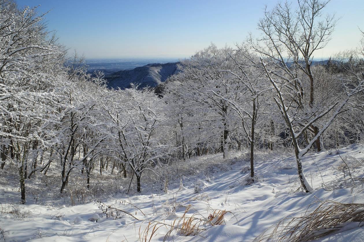 陣馬山の霧氷