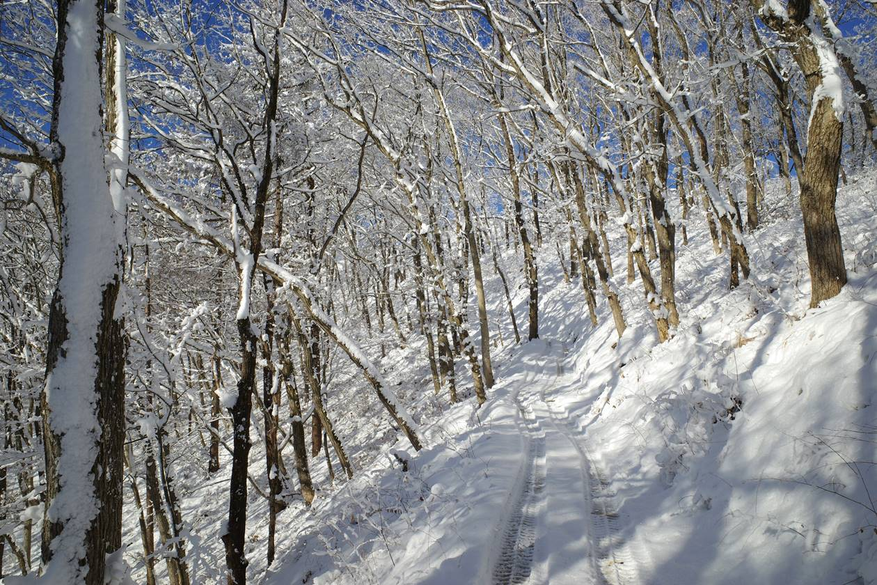 陣馬山~高尾山 霧氷天国の雪山登山