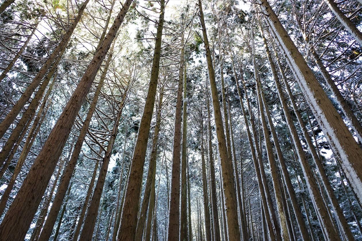 陣馬山 雪の森