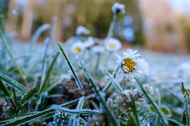 Winterly Blooming