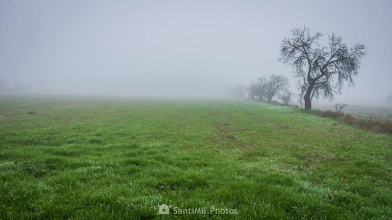 Árboles entre la niebla junto al camino de Guimerà a Verdú