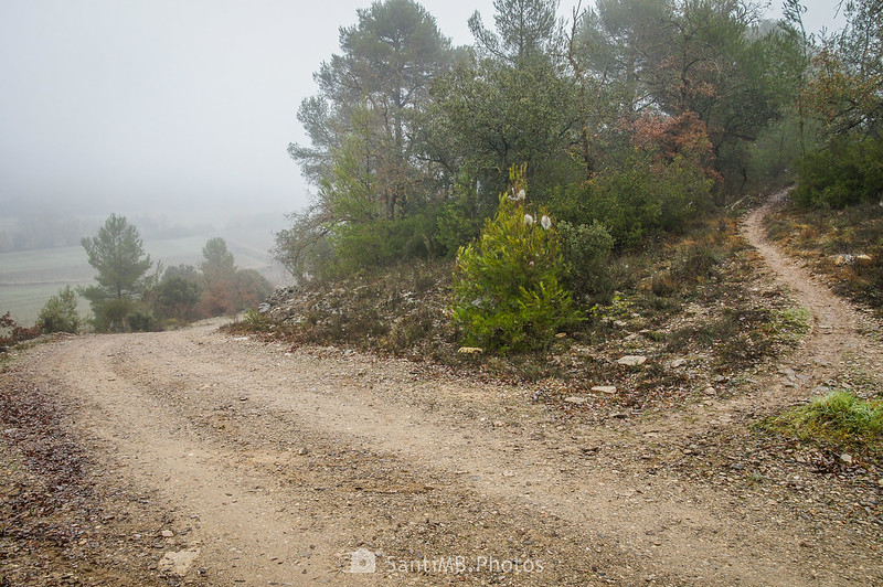 Zona boscosa en el camino a Mas de Bondia