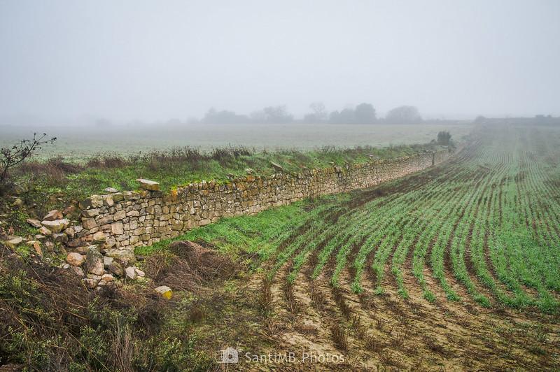 Muro entre dos campos de cereal cerca de la Cabana del Mullarac