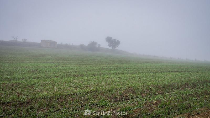 Campo de cereal junto al camino de Guimerà a Verdú