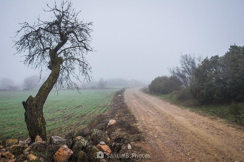 Árbol junto al camino de Guimerà a Verdú
