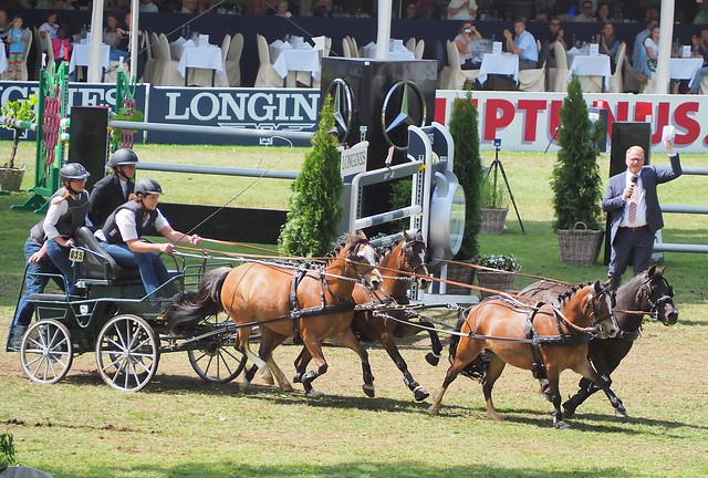 Germany - Horse Show in Wiesbaden Biebrich - June 2019 with over 1.000 horses