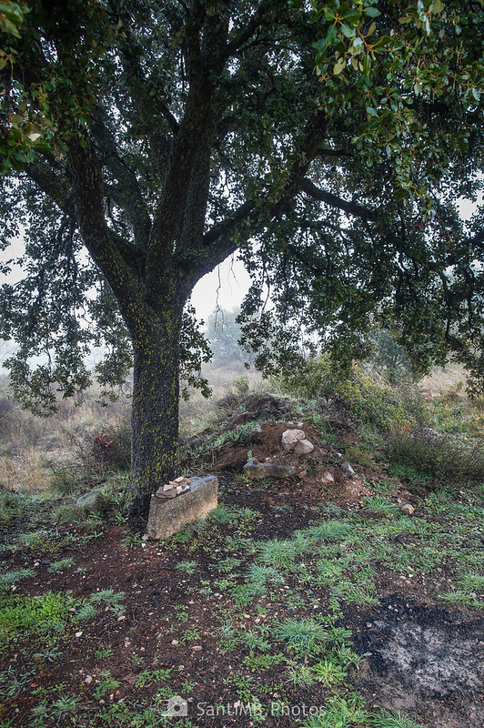 Encina con grupos de piedras frente a cabaña de piedra junto al camino de Mas de Bondia a Guimerà