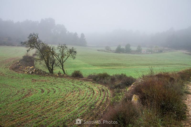 Campos de cereal entre Mas de Bondia y Guimerà