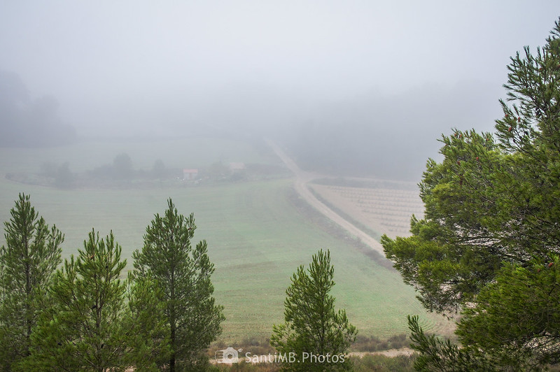 Campos entre Mas de Bondia y Guimerà
