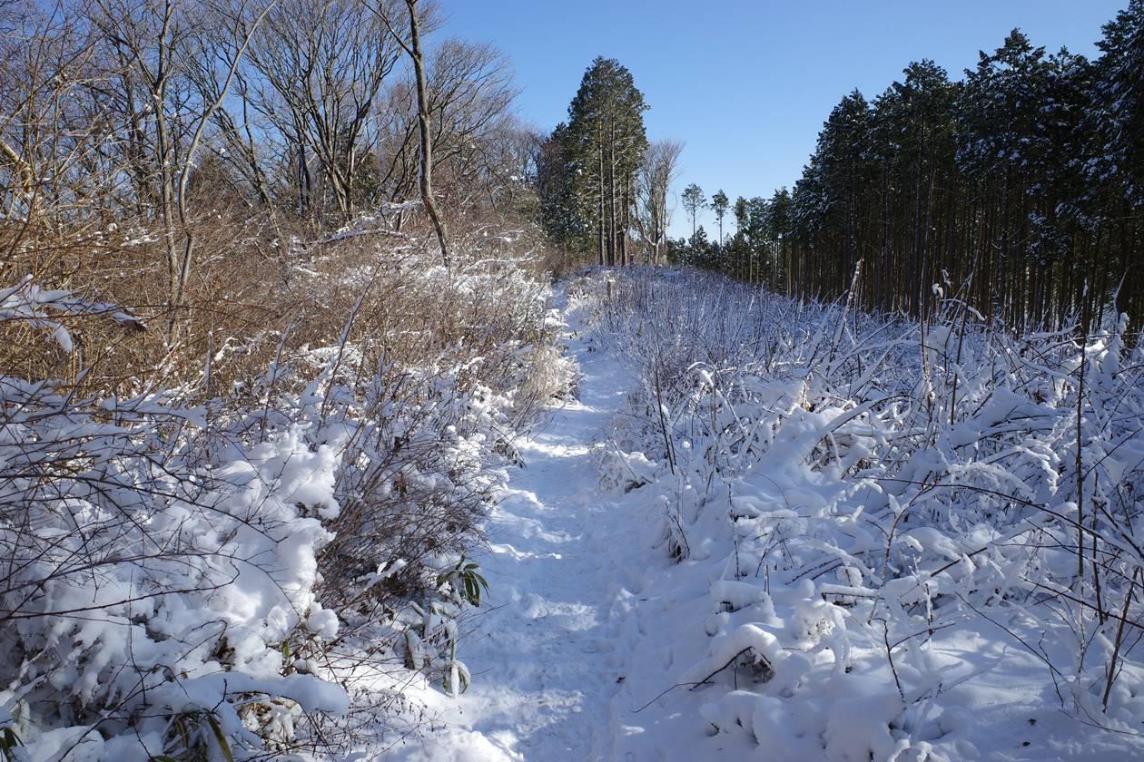 冬の陣馬山~高尾山 日帰り縦走登山