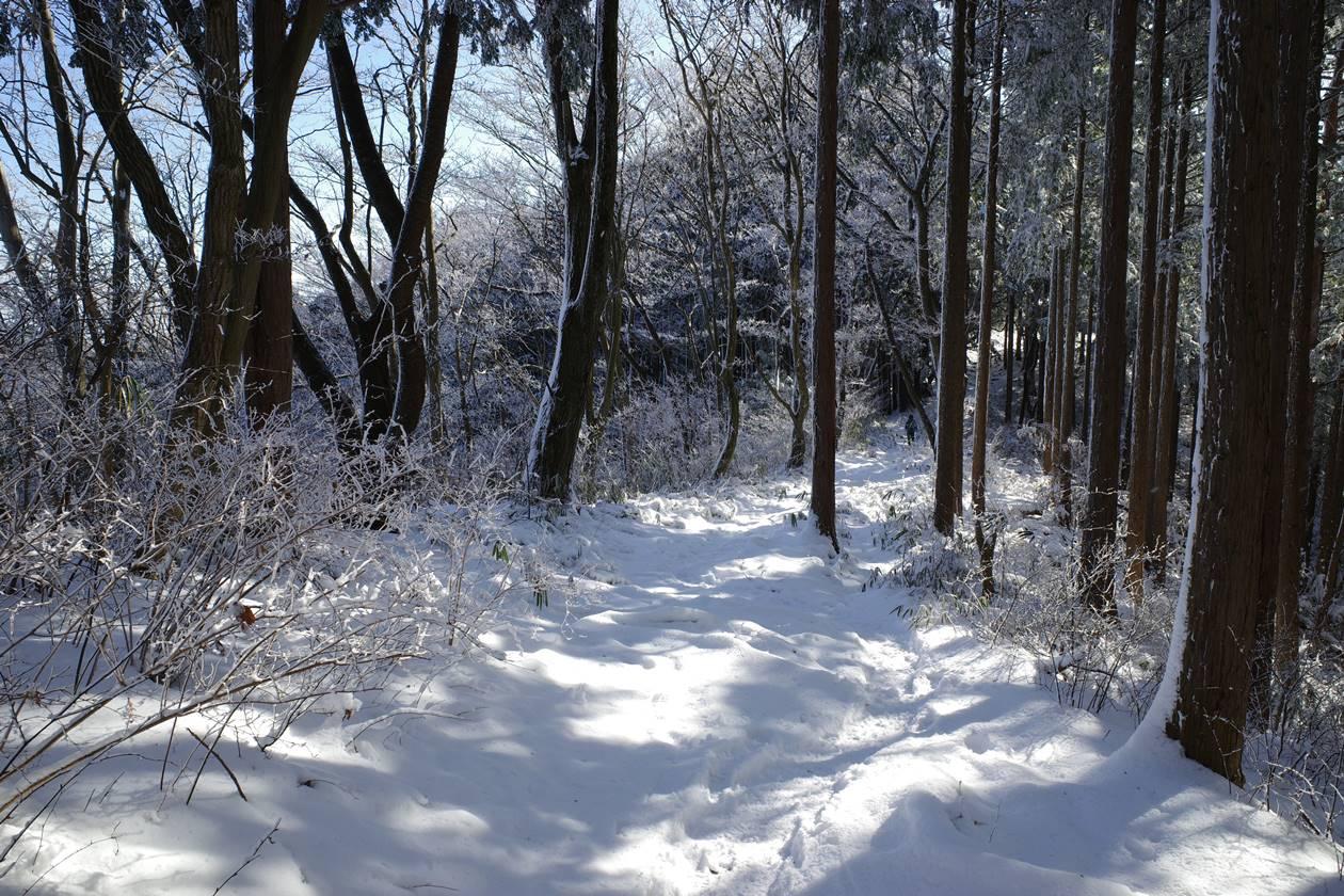 冬の陣馬山~高尾山 縦走登山