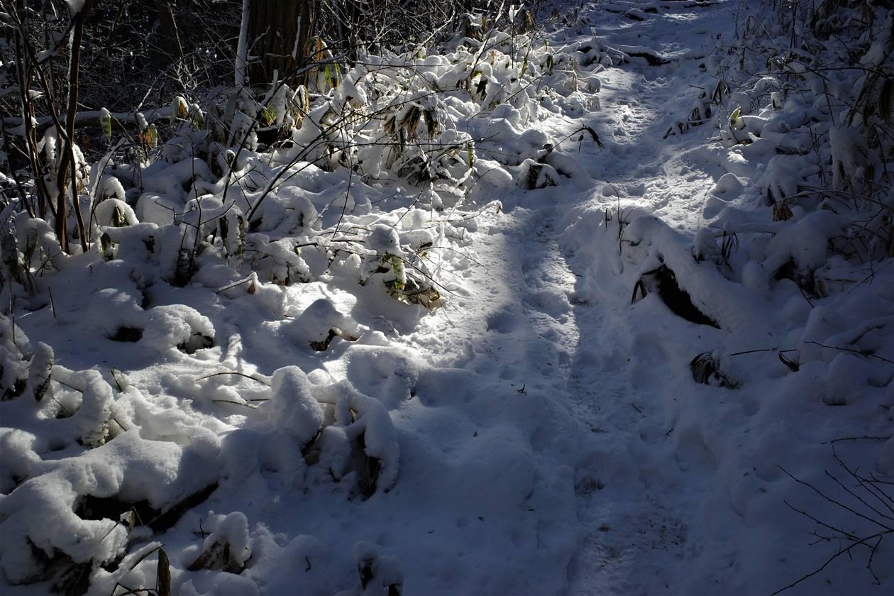 雪の裏高尾縦走路