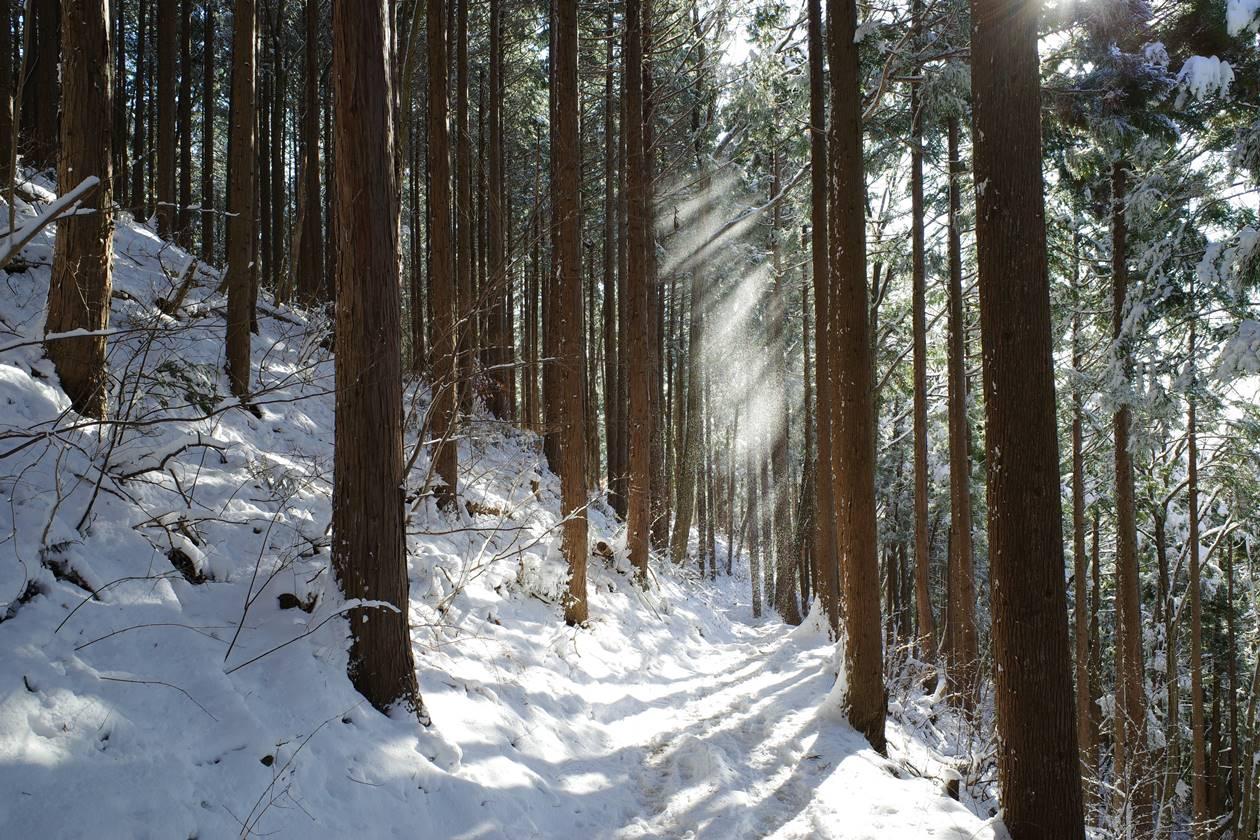 裏高尾縦走ルート 森に差し込む光